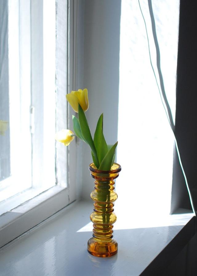 keltainen-tulppaani