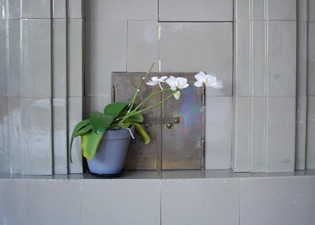 orkidea-takan-reunalla