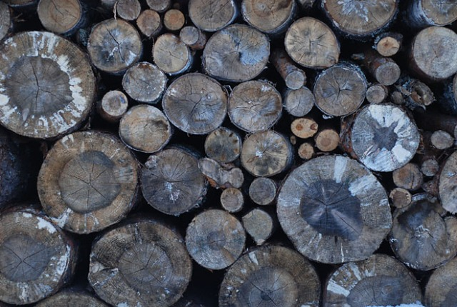 puut1