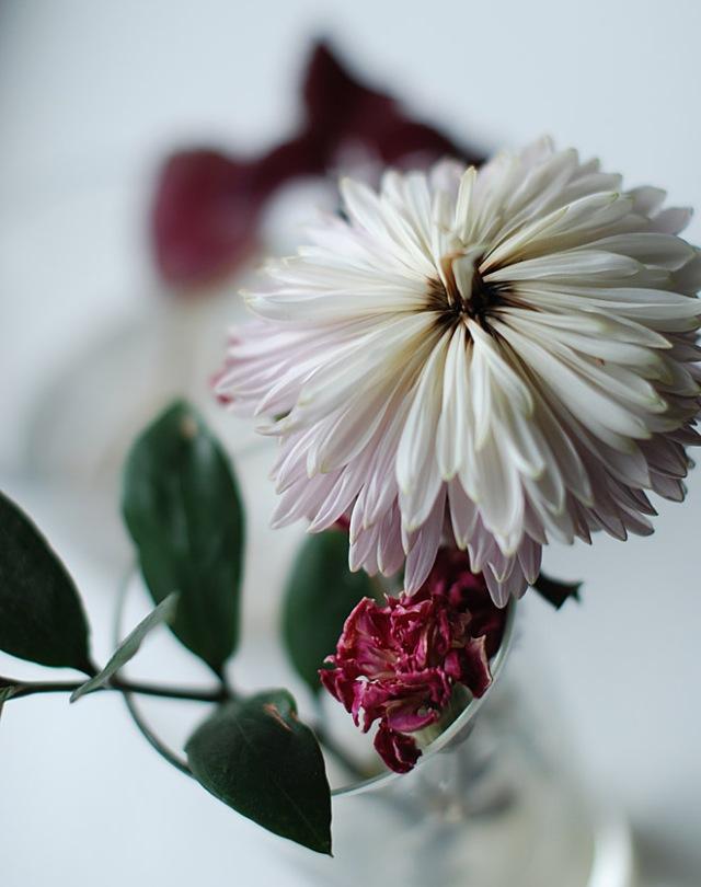 kuivunut-kukka