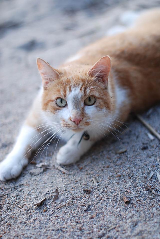 kaapeli-kissa