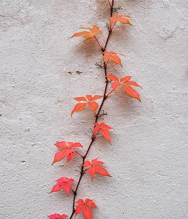 kasvi-seina