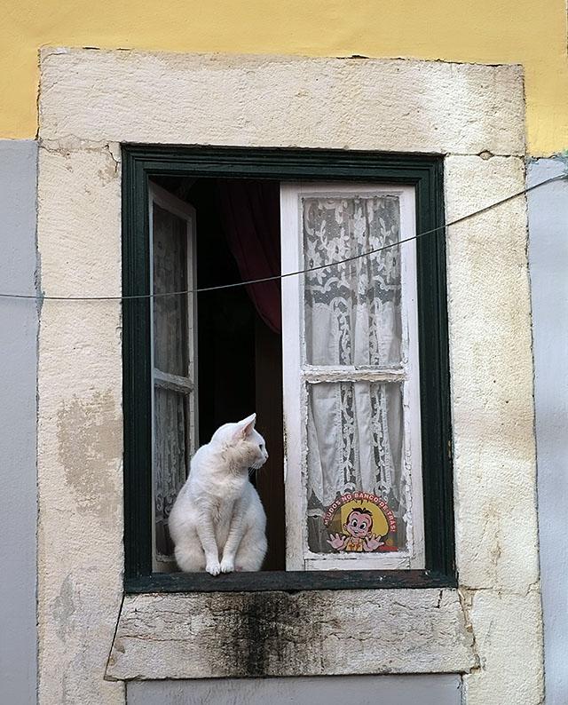 kissa-ikkunalla