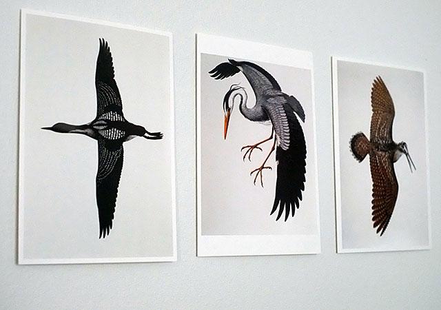 lintukortit