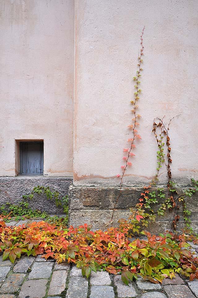 syksy-seina