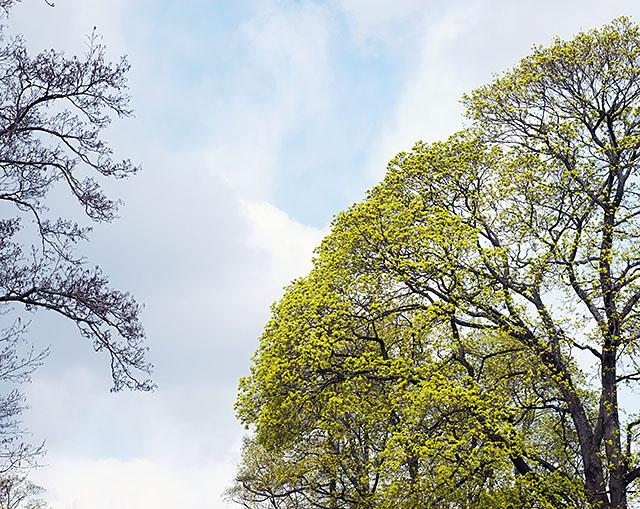 neon-green-tree