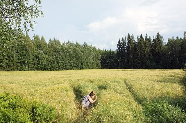 pellolla