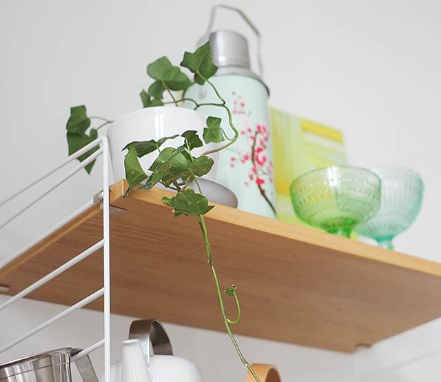 roikkukasvi