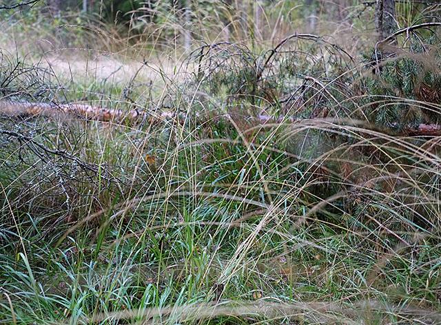 sateen-jalkeen-metsassa-1