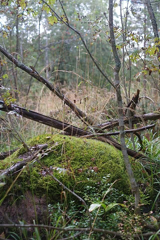 sateen-jalkeen-metsassa-2