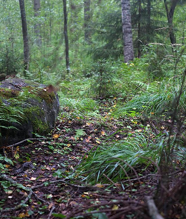 sateen-jalkeen-metsassa