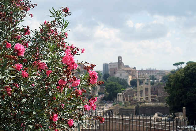 rome-flowers-2