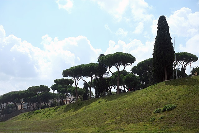 rome-green-and-plants-6