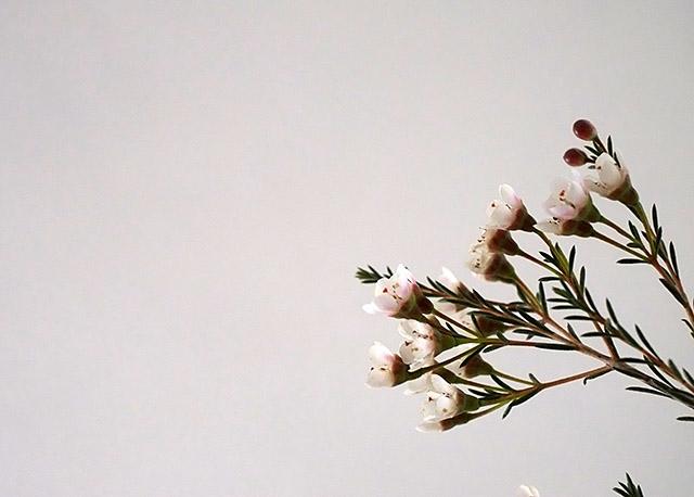 pieni-kukka