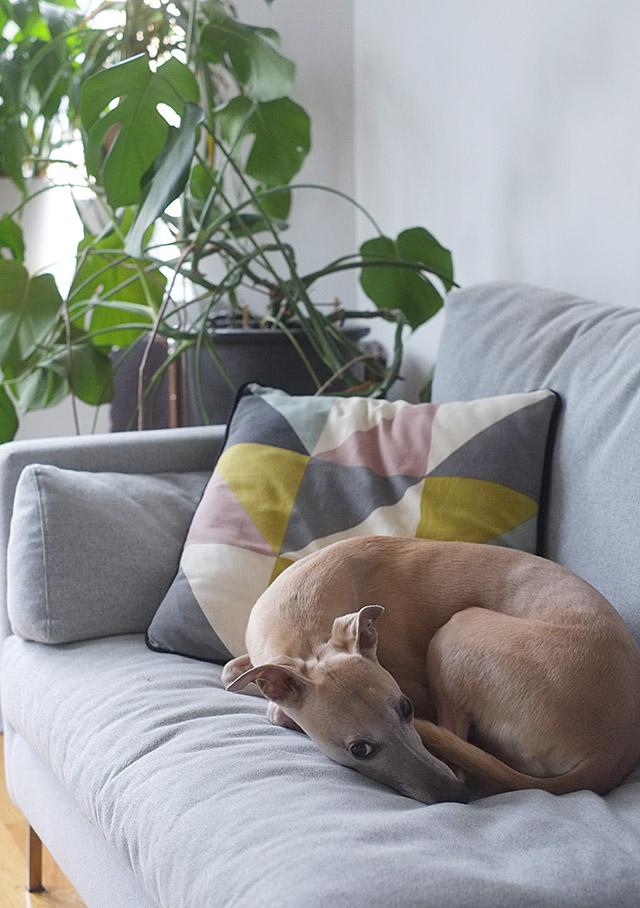 koiranpäivät
