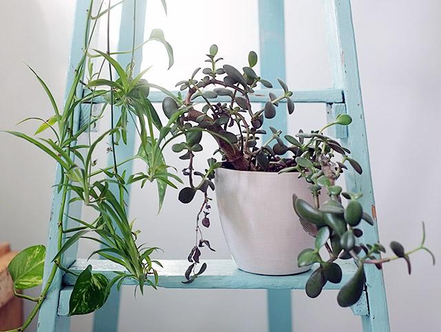 viherkasvit-1