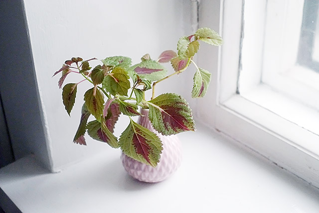viherkasvit-3
