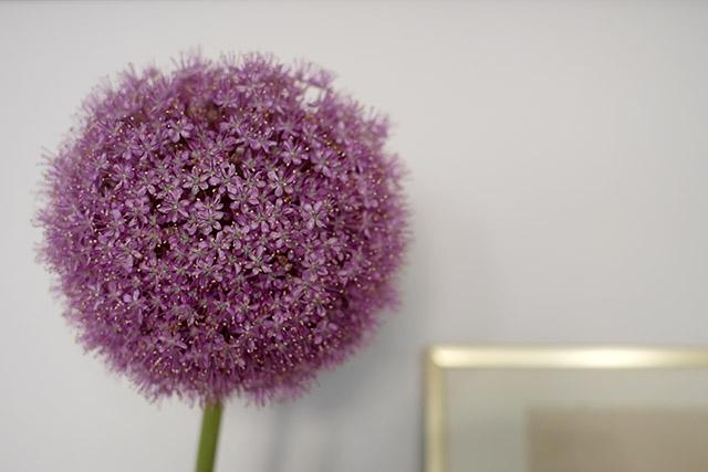 kukkia-kotona-1