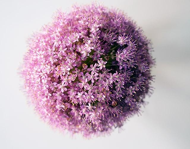 kukkia-kotona-4