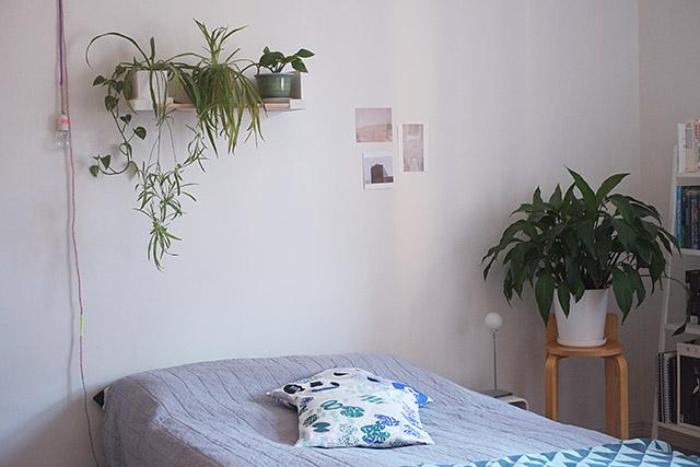 kasvihylly-aitio-3