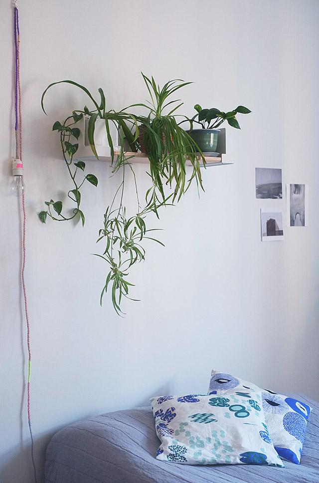 kasvihylly-aitio