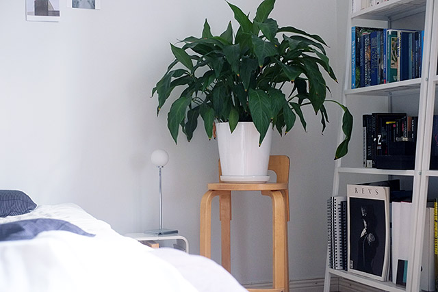makuuhuone-viherkasvi
