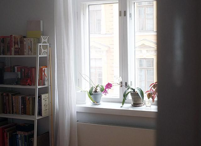orkideat-ikkunalaudalla