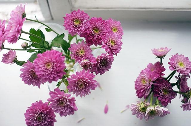 kukat-ikkunalaudalla-2