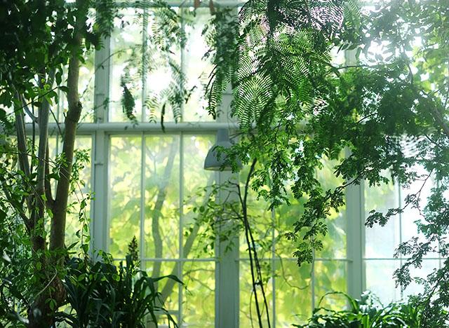 kasvitieteellinen-puutarha-3