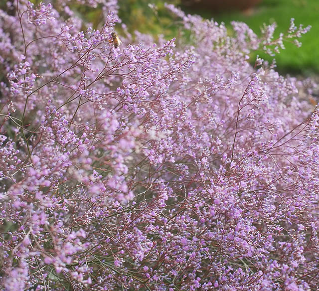 kasvitieteellinen-puutarha-4