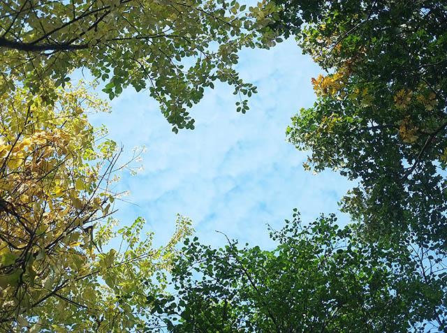 syksyiset-puut