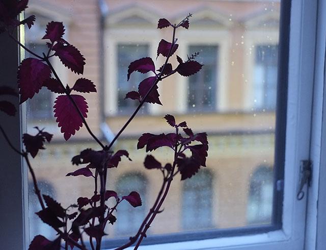 pisarat-ikkunassa-4