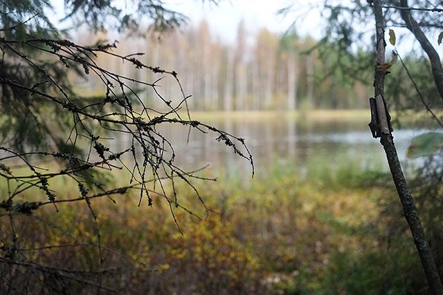 suomen-luonto