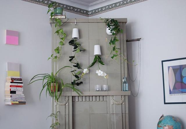 takka-ja-viherkasvit